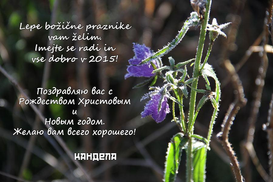 Lepe praznike in srečno 2015. С Рождеством Христовым и Новым годом!