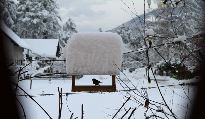 zima - dnevnik samostojne podjetnice